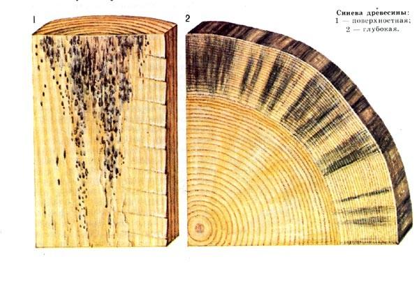 Как уберечь деревянный дом от плесени?