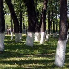 Красим садовые деревья!
