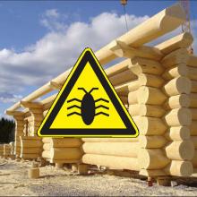 Как уберечь деревянный дом от древесных насекомых?